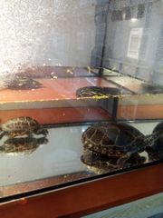 Schildkröten tauschen