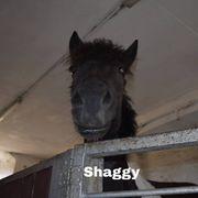 Reitbeteiligungen auf 2 Ponys zu