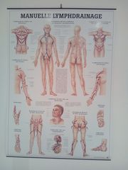 Poster Lymphdrainage