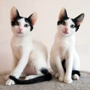 Katzengeschwister Elina und Sweety möchten
