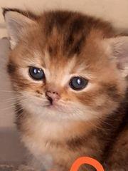 Erwachsene Katze 1 Jahr alt