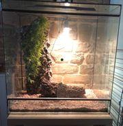 Terrarium für Schlangen
