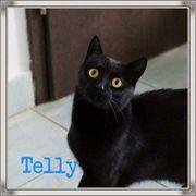 Telly ein Hundefreund sucht