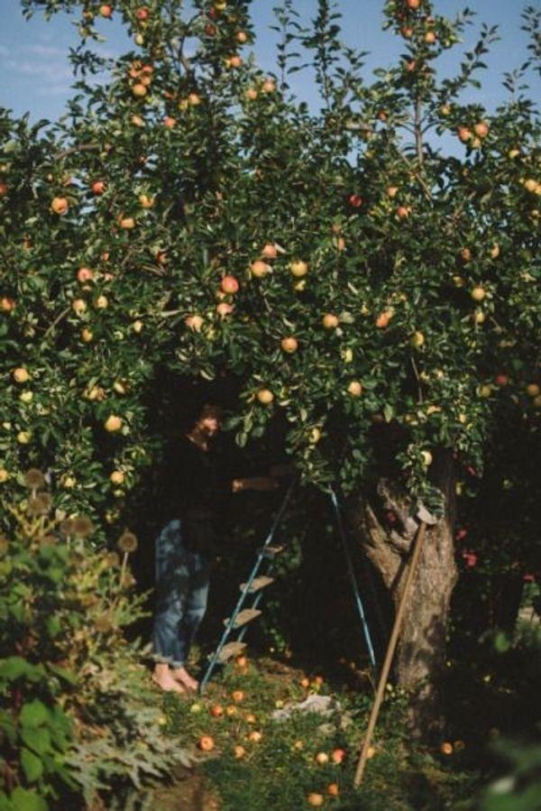 Suche Gartengrundstück zur Pacht