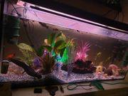 aquarium mit axeloten