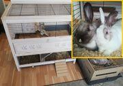 Kaninchenpaar sucht neues Zuhause mit