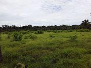 Brasilien 50 Ha Tiefpreis - Grundstück