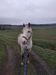 Ich suche für mein Pferd