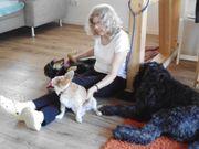 Hundebetreuung in der Familie
