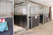 Pferdebox für Pferde bis Stm