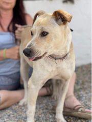 HUGO - Labradormischling sucht neues Zuhause