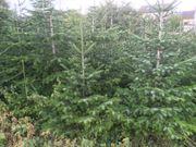 Nordmanntannen Weihnachtsbäume Christbäume