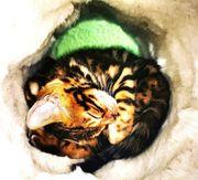 WILD Katzen BEN N 24