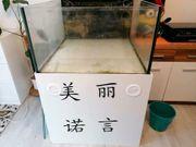 Meerwasserauflösung 500 Liter Becken Weissglass