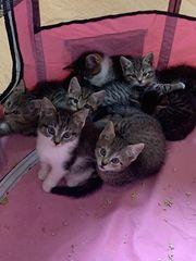 Kitten Katzenbaby