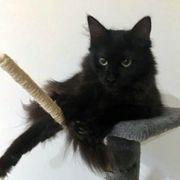 Kätzchen Sasha sucht ihre Menschen
