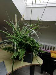 Zimmerpflanze mit Farn und Grünlilie
