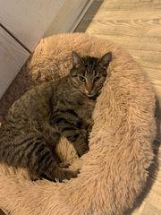 Liebe Katzen suchen neues Zuhause