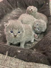 BKH Kitten Point