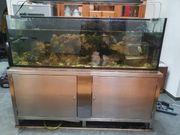 meerwasser aquarium ohne Inhalt
