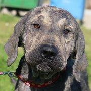 Walker vom Hundegarten hat schwere