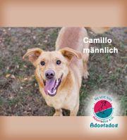 Camillo - warum muss ich hier