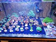 verschiedene Korallenableger Korallen