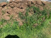 tolle Erde Mutterboden