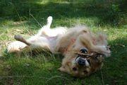 7- Ganzwöchige ganztägige Hundebetreuung Hundesitting