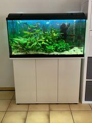 Aquarium komplett 200l