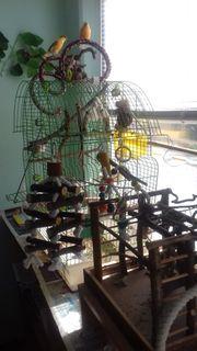 verkaufe Pärchen Kanarienvögel