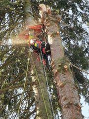 Baumschnitt Baumfällung Baumpflege Obstbaumschnitt