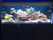 Red Sea Reefer 525XL Meerwasseraquarium