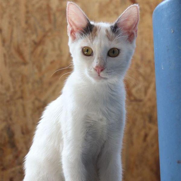 Soziales Kätzchen Kitty ist bereit