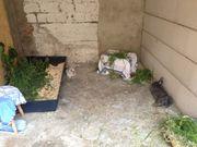 Urlaubsbetreuung für KLeintiere - Meerschweinchen Hasen