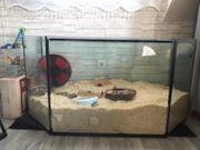 Aquarium nagarium