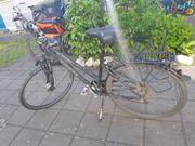 Fahrrad Pegasus Premio Damenrad Trapez
