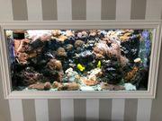Meerwasser-Aquarium 1150 Liter