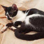 Katzenmädchen Felicia möchte reisen