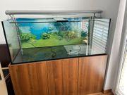 Aquarium 150x50x50 cm inkl Filter