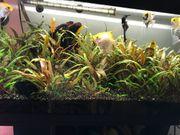 Juwel Aquarium mit Unterschrank