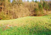 Grundstück im Vorderland gesucht