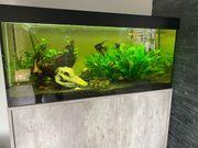 Süßwasser Aquarium komplett mit Besatz