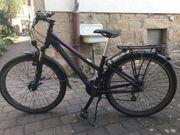 Fahrrad Bergamont