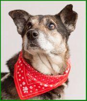 Sarus - Mischling - 8 Jahre - Tierhilfe