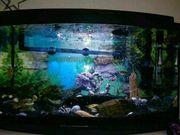 Panorama Aquarium LED komplett mit