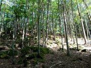 Waldgrundstück mit kleiner Wiese
