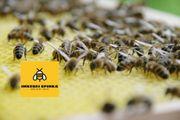 Weihnachtsgeschenk - Bienen Patenschaft