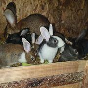 Kaninchen suchen ein Zuhause