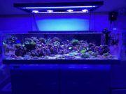Meerwasser Aquarium 120x75x35 cm
